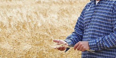 Volatile Markets Can Lead to a Potential Harvest